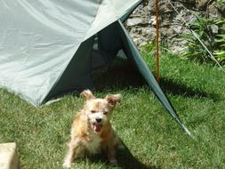 Dog House Tent for Backpacking - Appy Tr